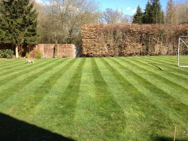 As you can see, simply removing the weeds has already helped the look of the lawn