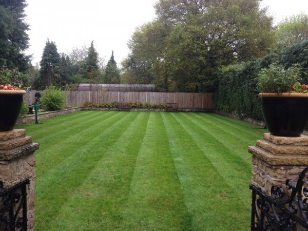 With our lawn care program the lawn is now weed and moss free and recovering nicely from its treatments
