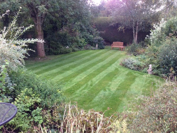 A great example of one of our TLC lawns.