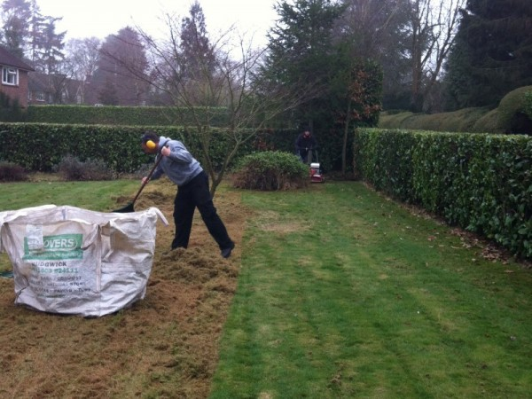 Removing built up thatch, first pass.