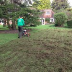 removing moss in the lawn